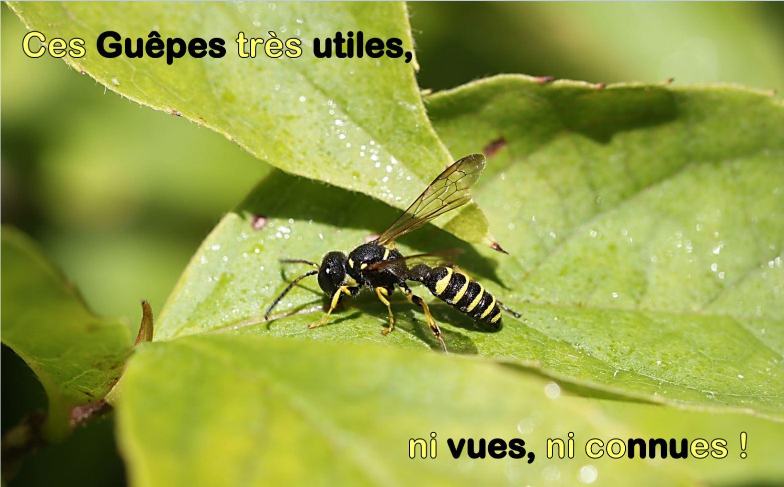 Image_guepes